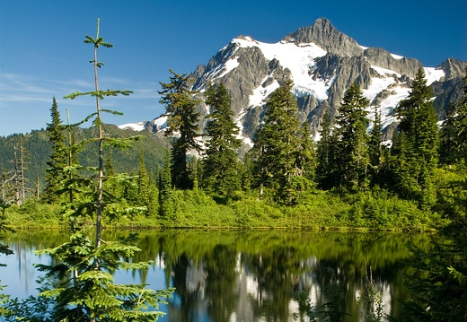 Mount Shuksan at Highwood Lake, Patch of Lupine