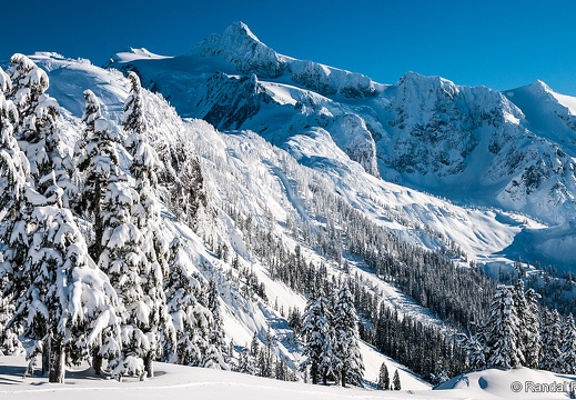 Mount Shuksan, Snow Trees