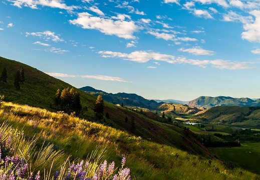 Methow Valley Panorama, Lupine, Pearrygin Lake