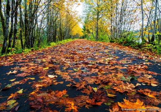 Whitehorse Trail, Leaves on Path